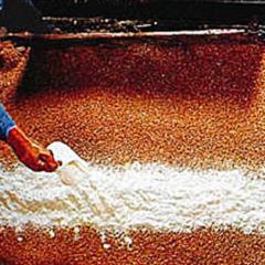 輸入小麦とポストハーベスト