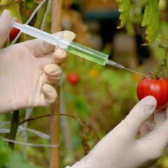 遺伝子組み換え農業が作り出す問題①